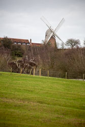 Oxford_Canal_[South]_Napton_Windmill-909.jpg